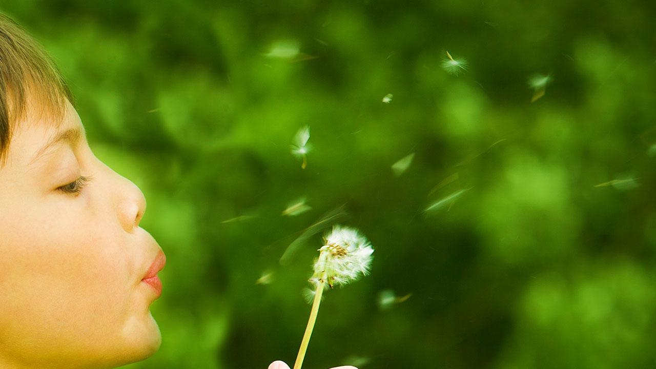 Bub mit Pusteblume für OTS Verbreitung