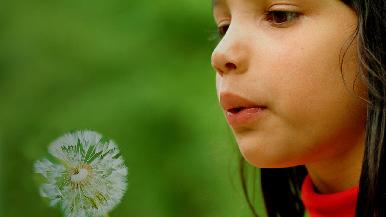 Mädchen mit Pusteblume für Contentverbreitung