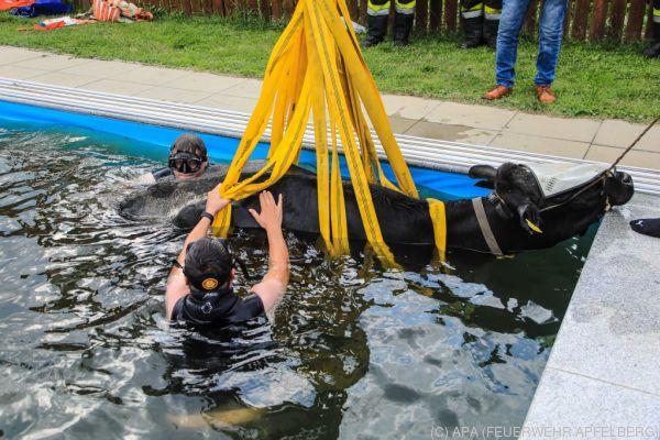 Auf dem Foto sieht man, wie die Feuerwehr die Kuh mit einem Kran aus dem Swimmingpool hebt.